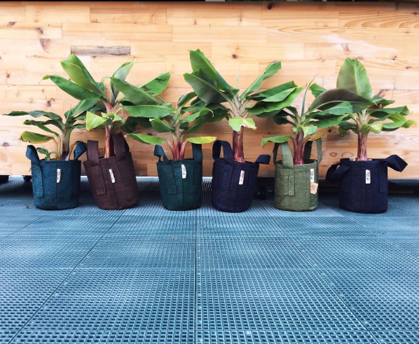 Gardening with Root Pouch bags