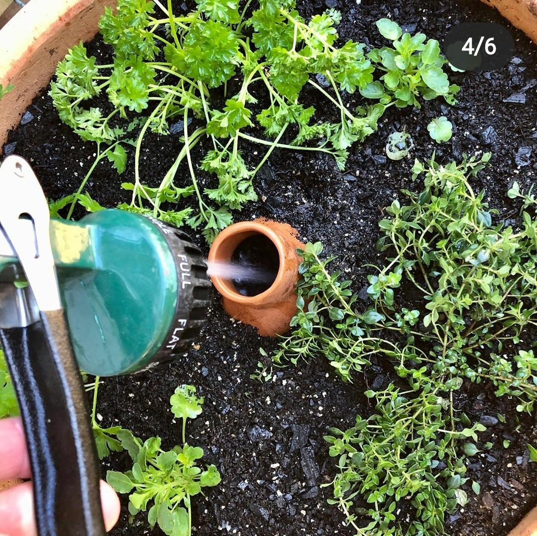 Irrigation with Ollas