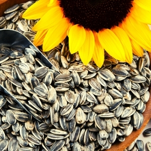 Sunflower Seeds: The Superfood You Might Be Missing Out On