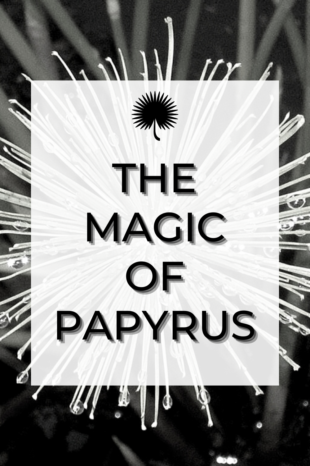 "Graphic linking to Pinterest with text reading, ""the magic of papyrus"" and a black and white photo of papyrus in the background"