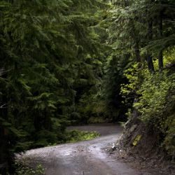 Image of a dusky, cedar filled forest with a path winding a corner