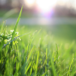 up close photo of fresh, green grass