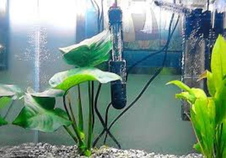 Top 5 Betta Fish Myths Debunked – Aquatic Delights