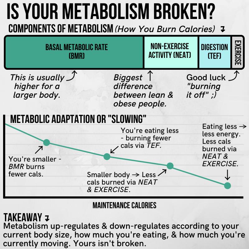 how often should you take diet breaks
