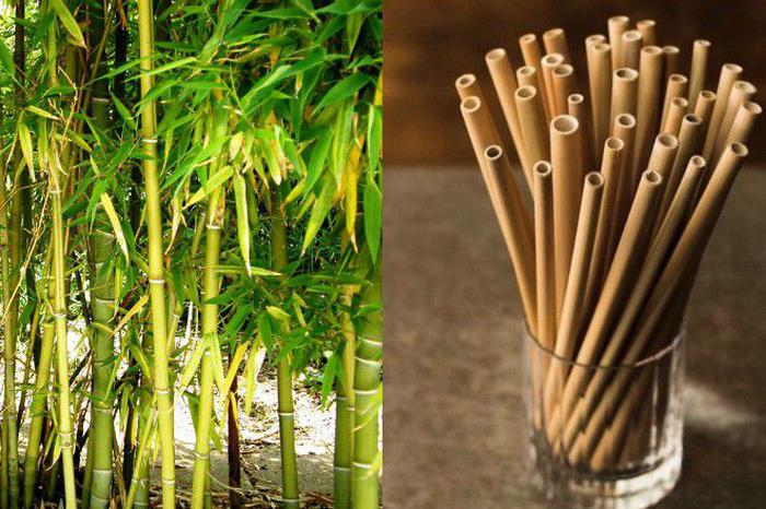 bamboo - plastic free alternative