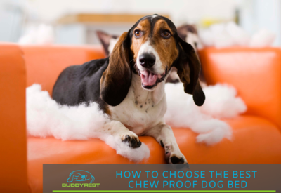 How to choose the best chew resistant dog beds!
