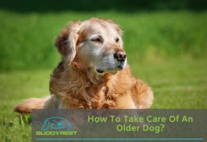 HOW TO TAKE CARE OF AN OLDER DOG?