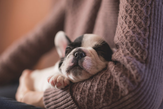 French Bulldog Sleeping in owners arms
