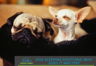 dog is restless at night not sleeping: Dog sleeping Position