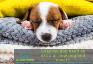DOES MY DOG NEED AN EXTRA OR NEW DOG BED COVER?
