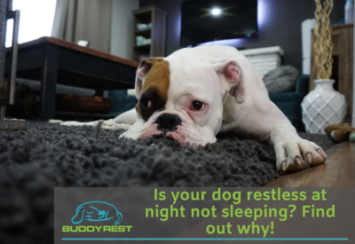 IS YOUR DOG RESTLESS AT NIGHT NOT SLEEPING? FIND OUT WHY!