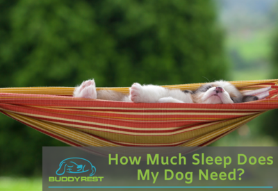 HOW MUCH SLEEP DOES MY DOG NEED?