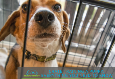 CRATE TRAINING A PUPPY: EVERYTHING YOU NEED TO KNOW