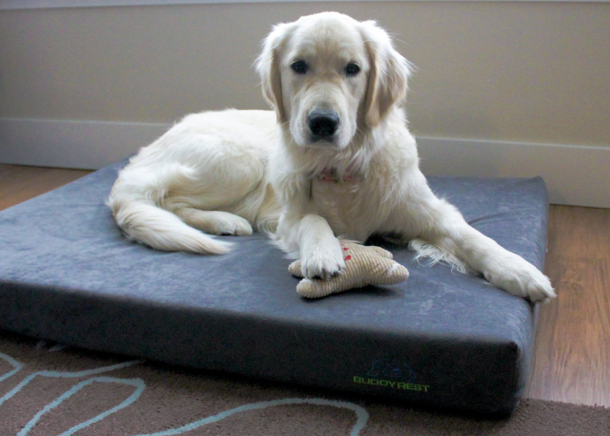 How To Introduce Your Dog To Their New Dog Bed