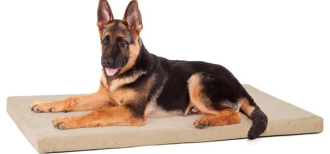 PREMIER MEMORY FOAM ORTHOPEDIC CRATE BED FOR DOGS