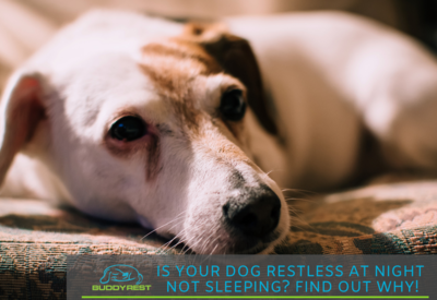 How to choose the right size dog bed