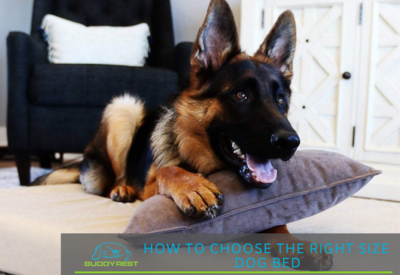 My dog is restless at night: How to choose the right size dog bed
