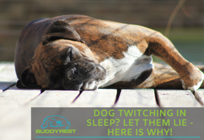 DOG TWITCHING IN SLEEP? LET THEM LIE - HERE IS WHY!