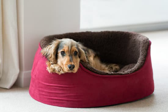 Small brown and tan dog laying in a red and brown dog bed.