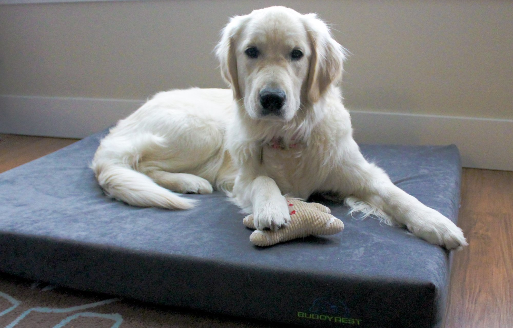 Comfort Deluxe Memory Foam Dog Bed
