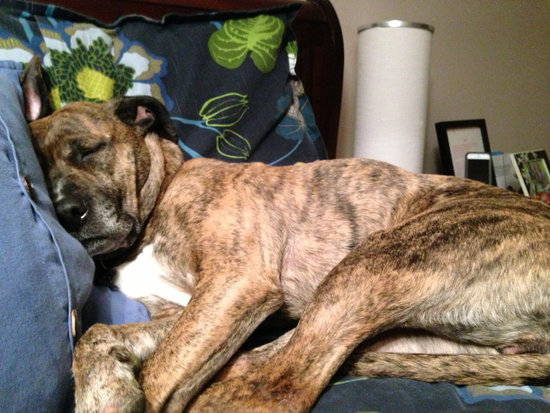 Dog Twitching In Sleep? Let Them Lie - Here Is Why
