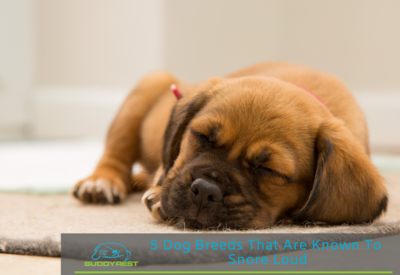 5 Dog Breeds That Are Known To Snore Loud