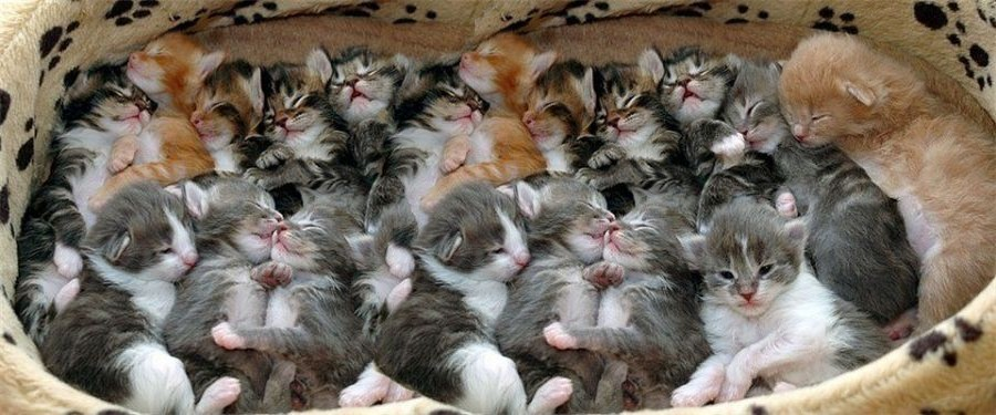 Number Of Kittens In Litter