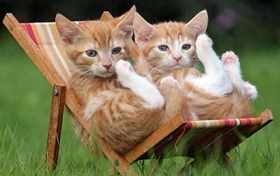 Cats chillin in the Summer Heat
