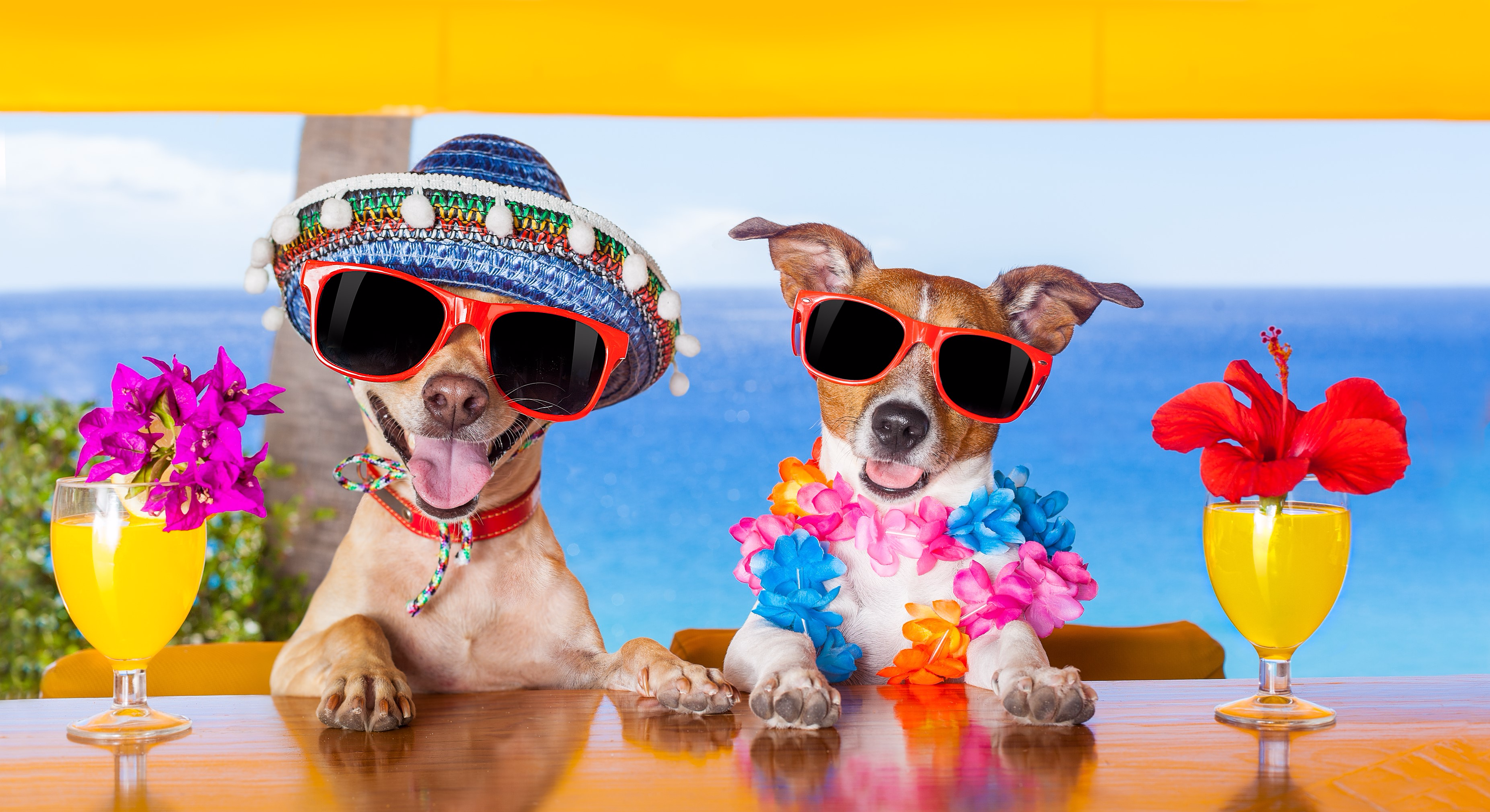 Keeping Pets Cool & Hydrated in Summer