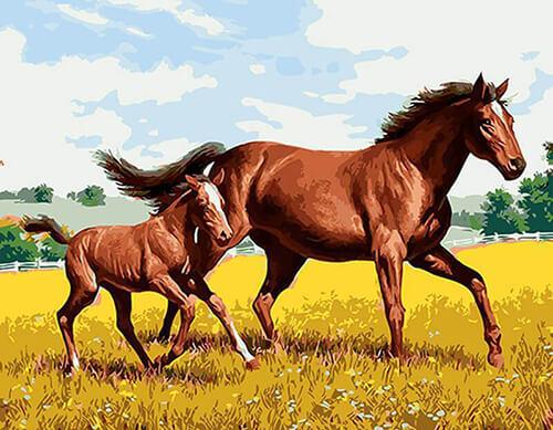 Malen nach Zahlen Pferd mit Pferdekind