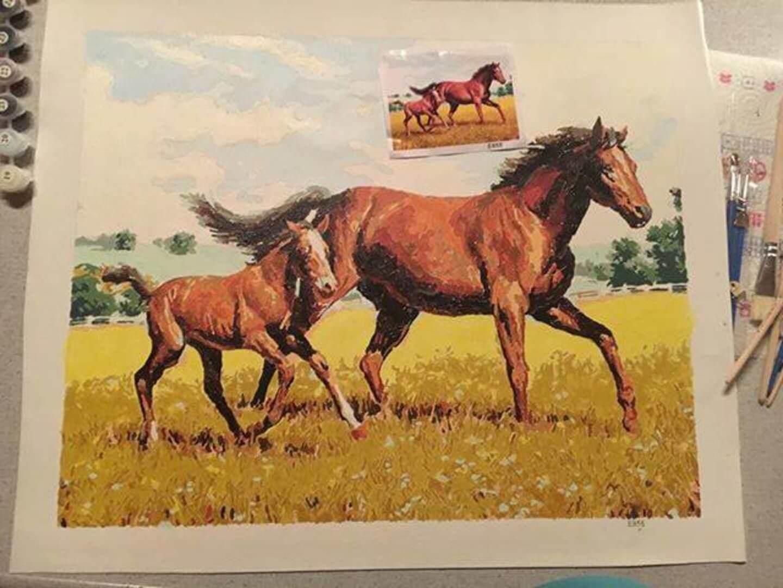 Malen nach Zahlen Pferdebild Bewertung