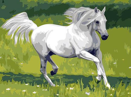 Pferd Schiml