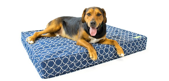 WHY YOUR DOG NEEDS A MEMORY FOAM DOG BED