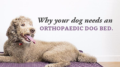 Why Your Dog Needs an Orthopedic Dog Bed