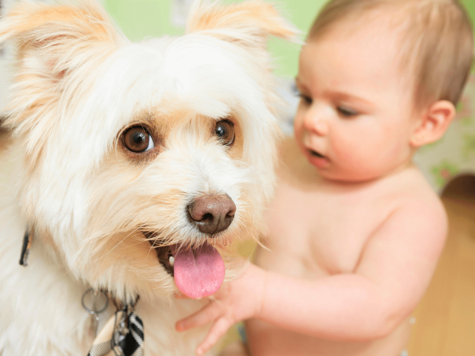 small-baby-playing-with-happy-dog