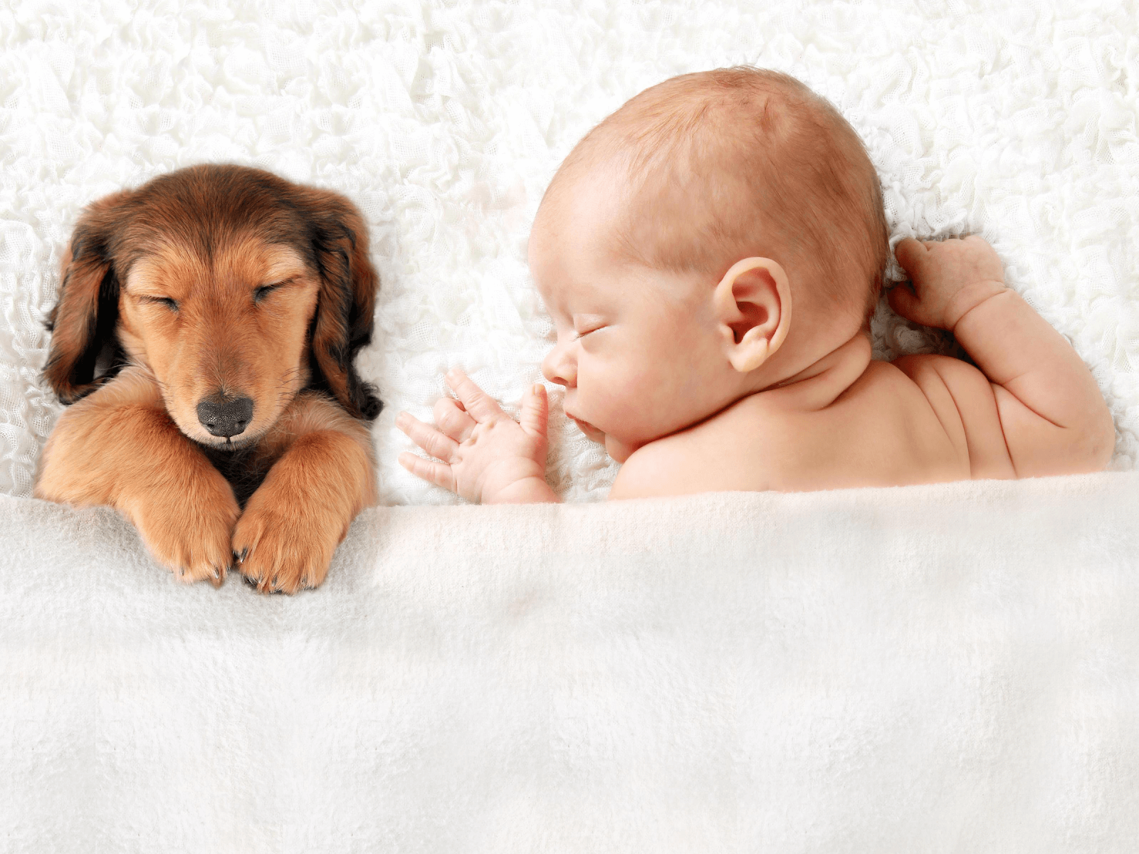 new-baby-and-dog-sleeping-soundly