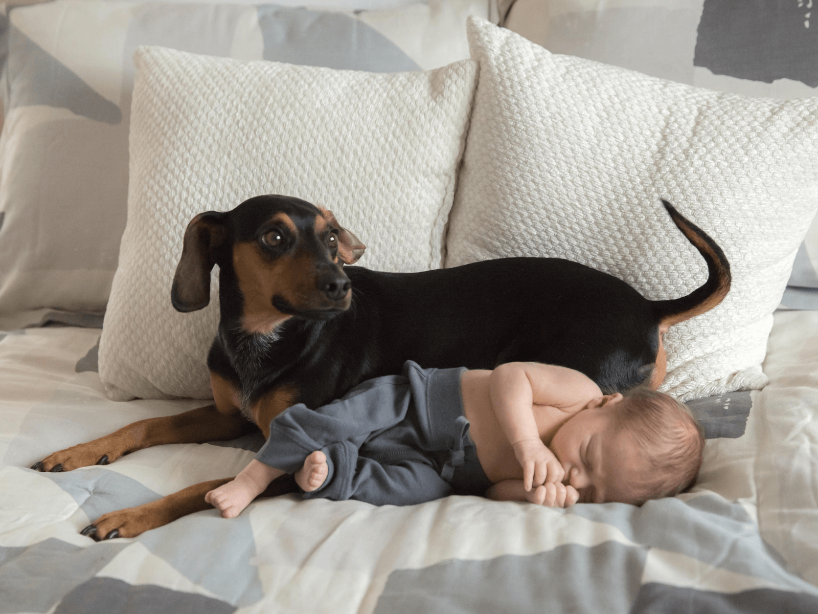 well-behaved-dog-with-sleeping-baby