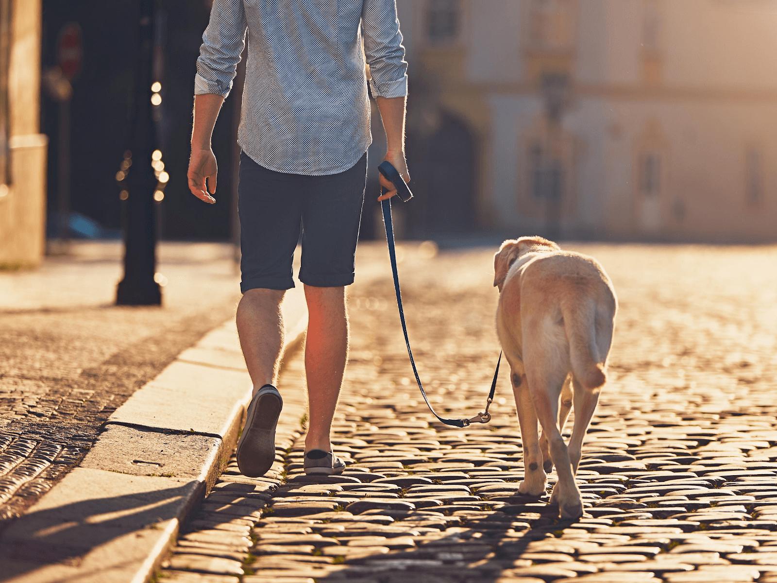 man-walking-with-dog