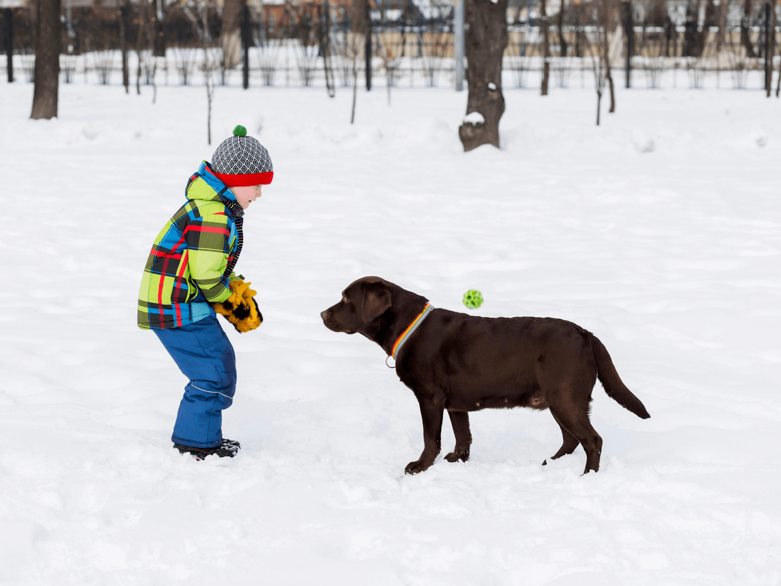 dog-interaction-with-children-on-snow