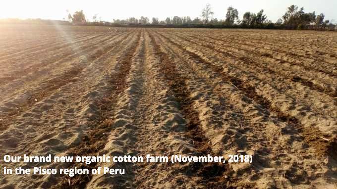 organic cotton farm
