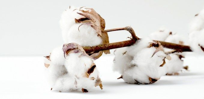 Organic Pima Cotton