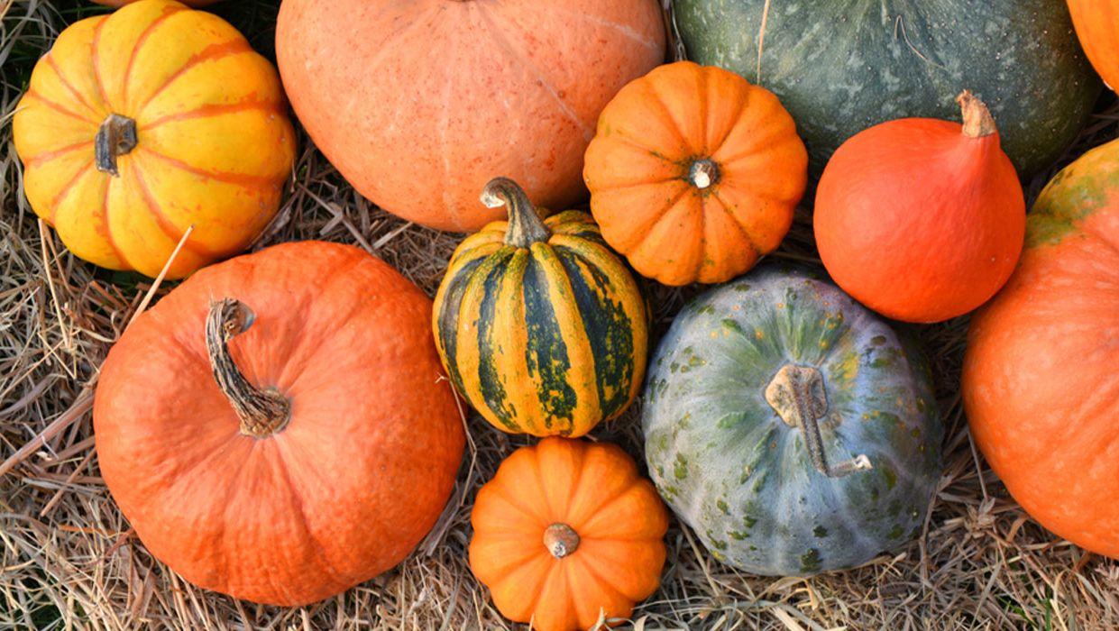 Ferry-Morse pumpkin garden seeds