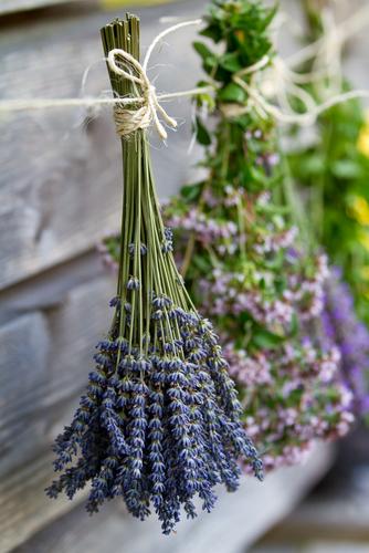 Air Drying Fresh Herbs, Lavender