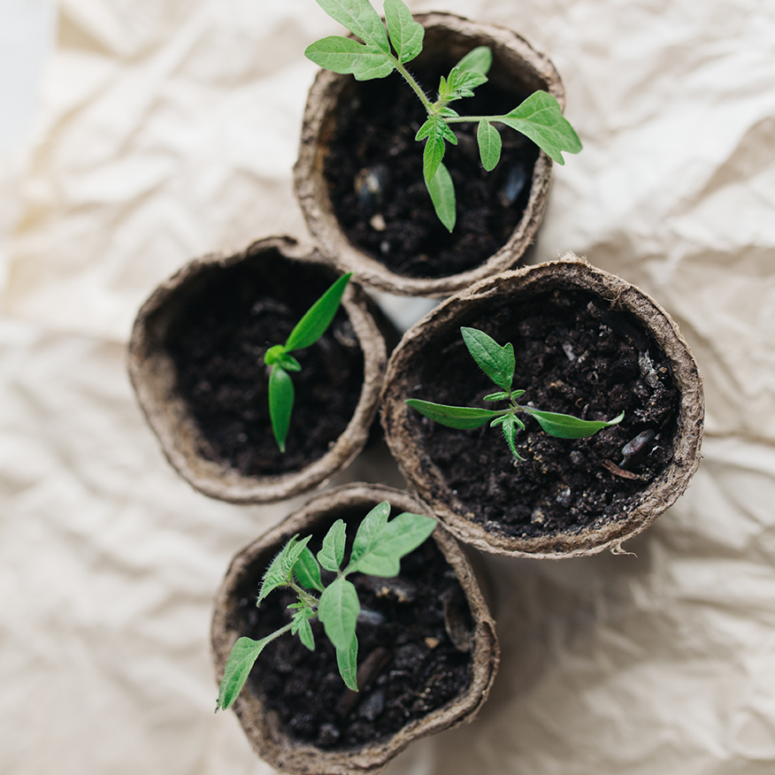 Seed Starting Peat Pots