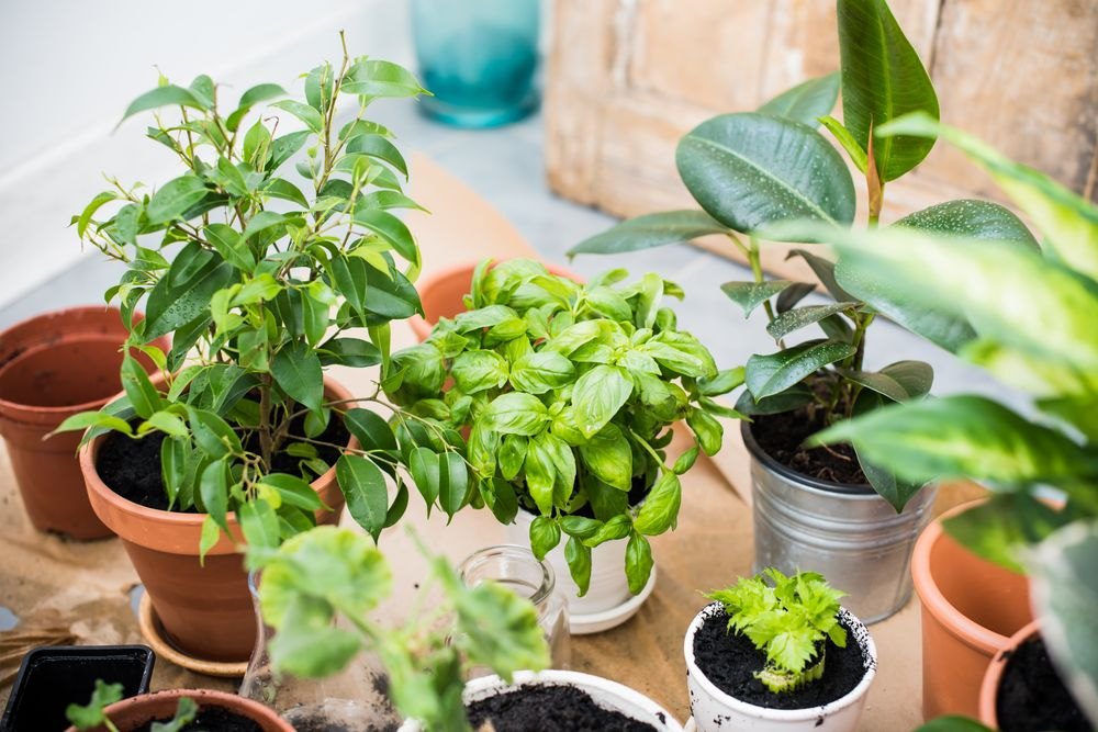 Indoor container gardening from seed