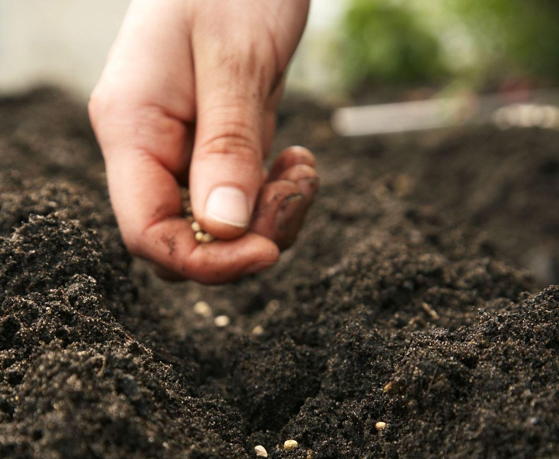 Best Soil For Pepper Plants