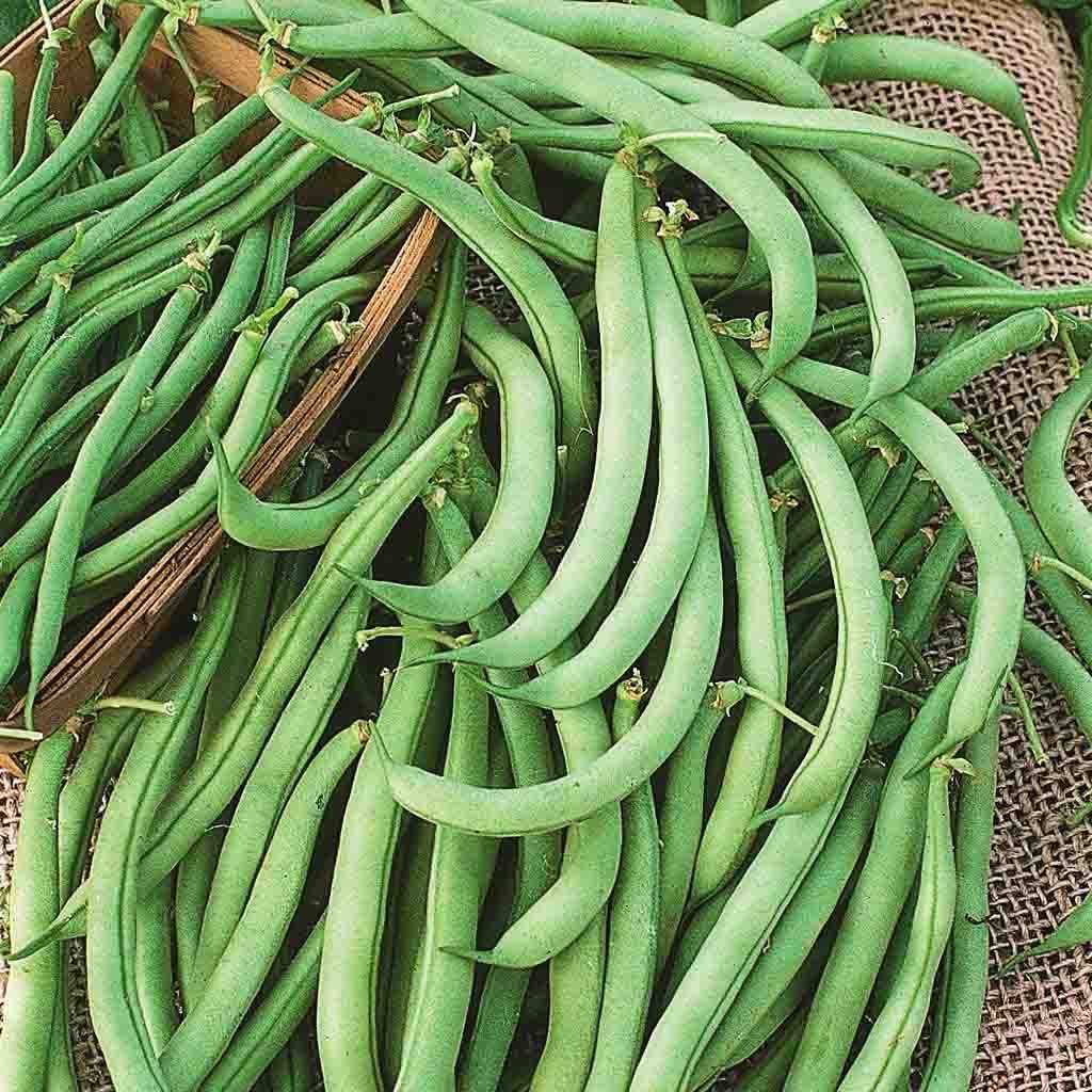 Bean Garden Tendergreen Improved Bush Heirloom