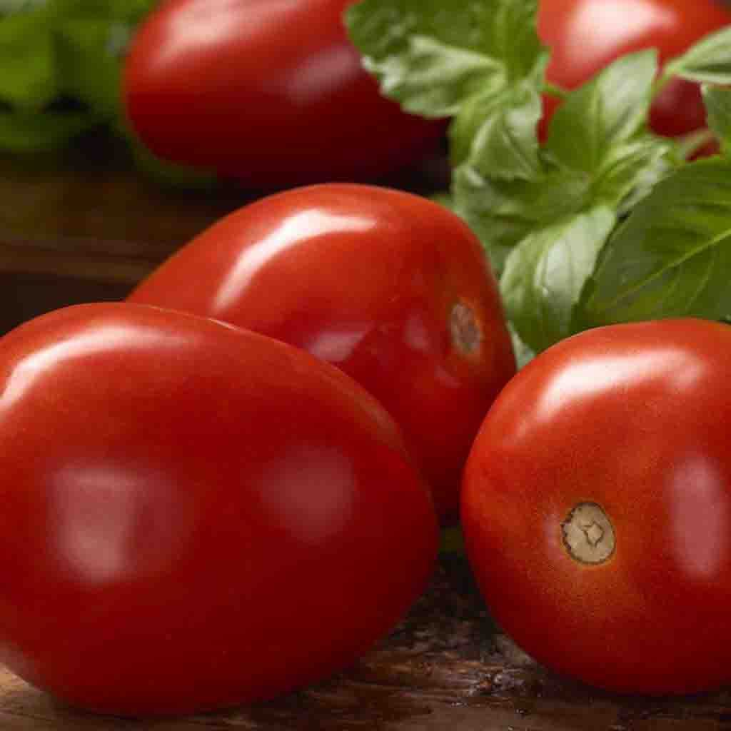 Tomato Roma VF Seed