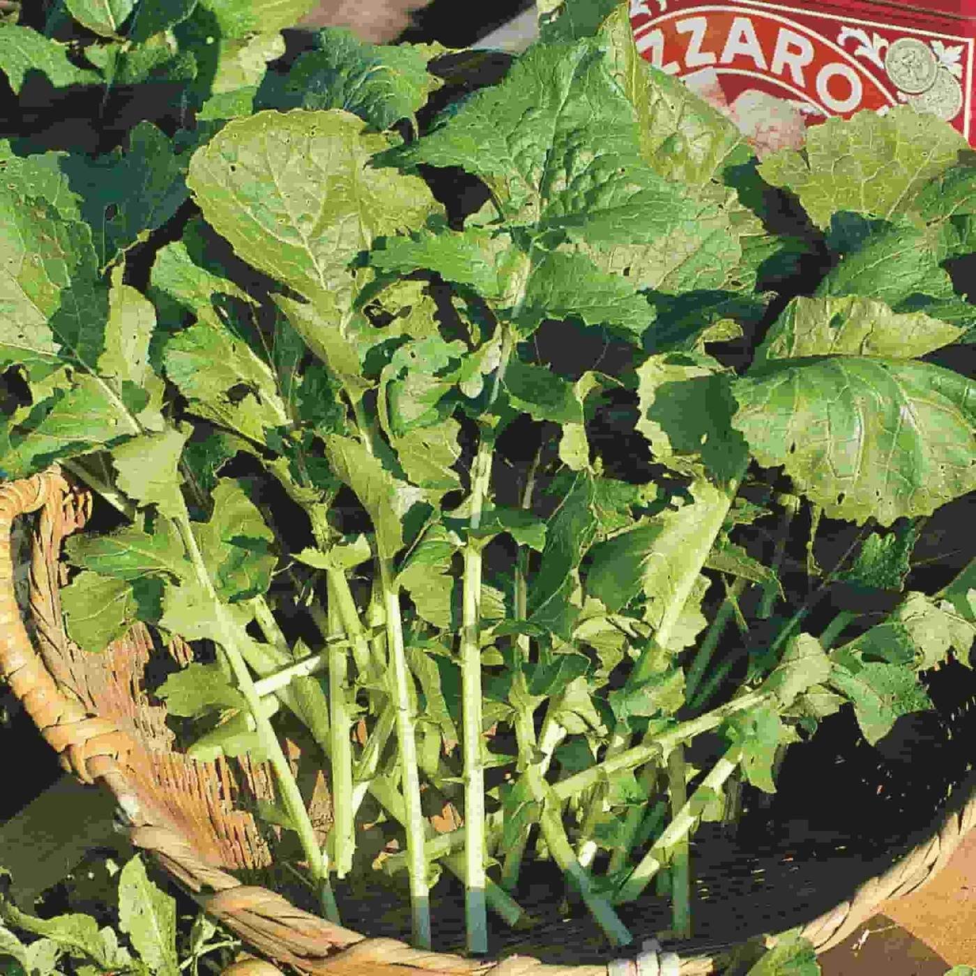 Arugula Roquette Heirloom