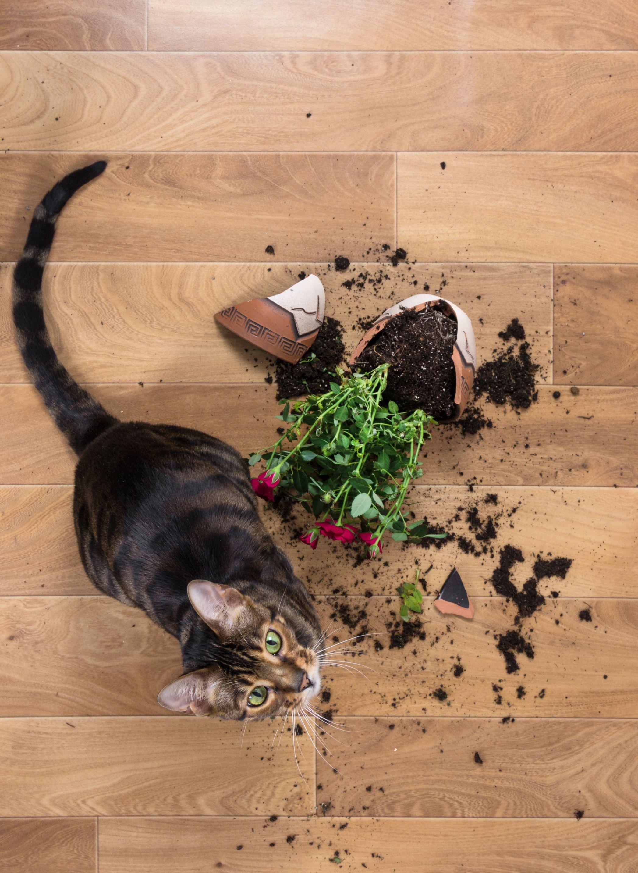 Cat with broken flower pot